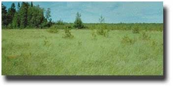 Perched prairie fen